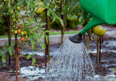 Wstrzymana dostawa wody do ogródków działkowych
